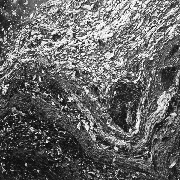 abstract black and white art of change in nature in St. Jacobs, Ontario