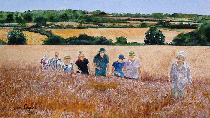 A walk through the cornfield