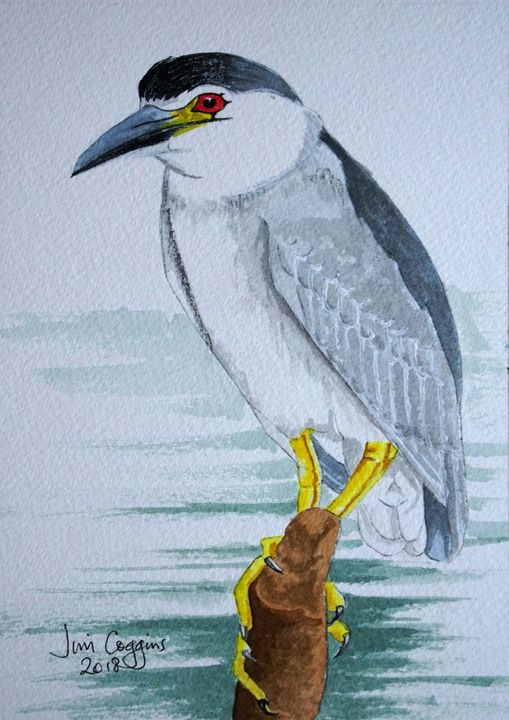 Black-Crowned Night Heron (After Andrew Forkner)