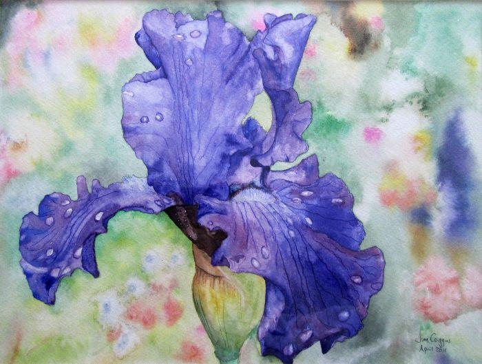Iris at Giverny