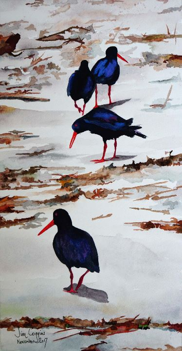 March of the oystercatchers