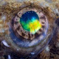 Eye of Angler Fish