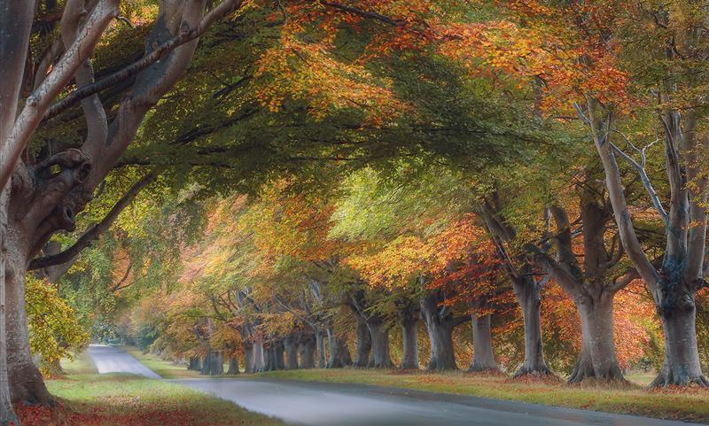 Beech Avenue, Dorset