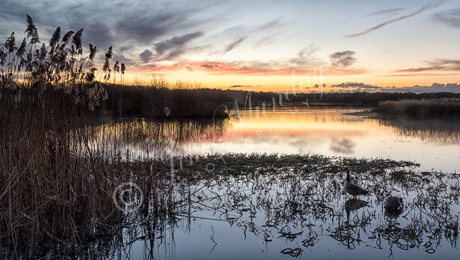 Dawn at Fleet Pond