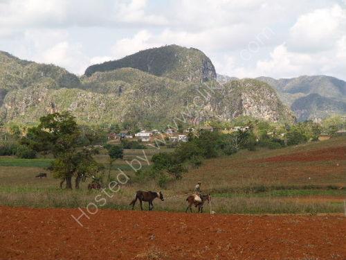 Vinales: Leading horse