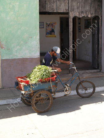 Bean man with tricycle, Trinidad