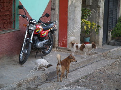 Dog meeting, Bayamo