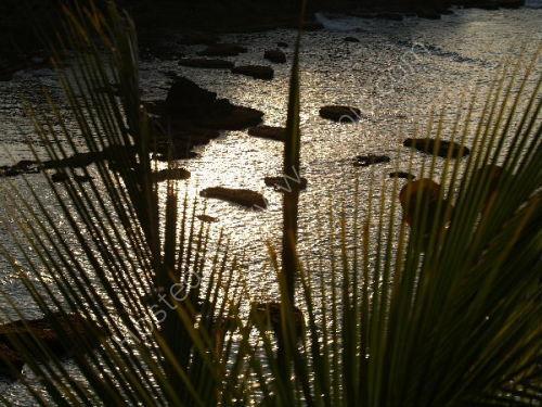 Palm fronds, Baracoa
