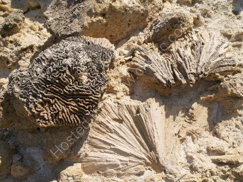 Fossils, Guantanamo coast