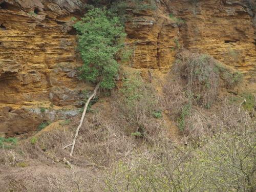 Sand Quarry in Bird Reserve