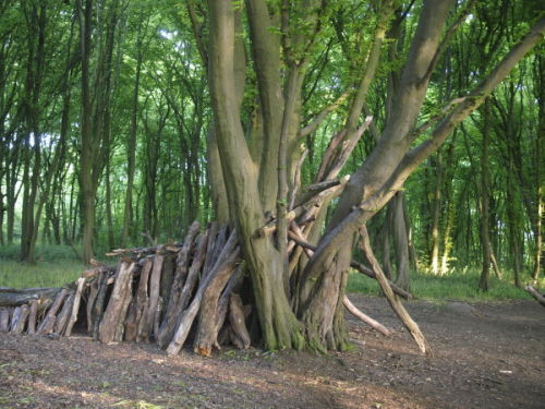 Scout Shelter, Langley Wood
