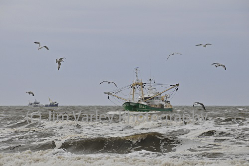 Fishing Boat In Storm