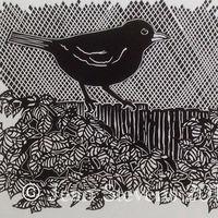 Colly Bird