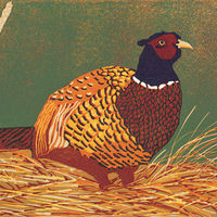His Lordship - Pheasant