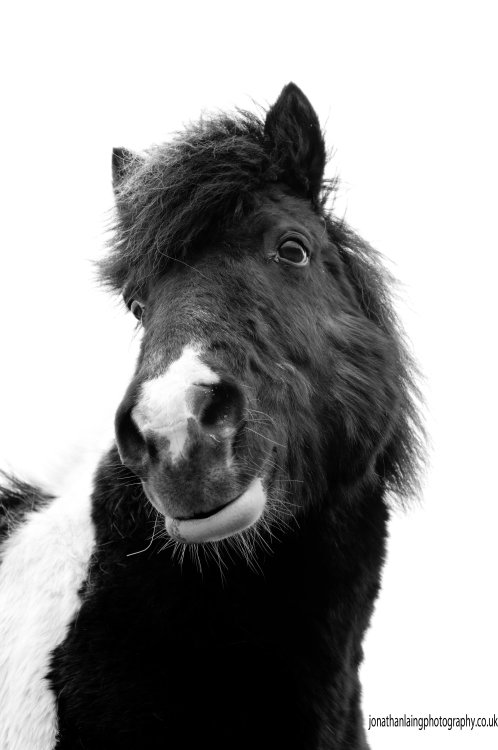 Still searching for a gift for your loved one (s).Give your animal companion a mounted photograph for Christmas to show them you love them.