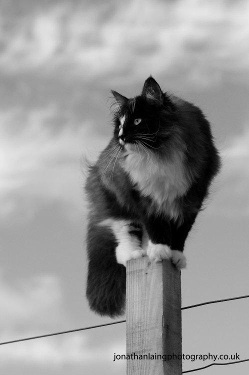 Fenella on lookout