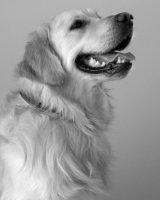 portrait of Murphy