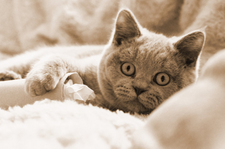 curious kitten Teddy