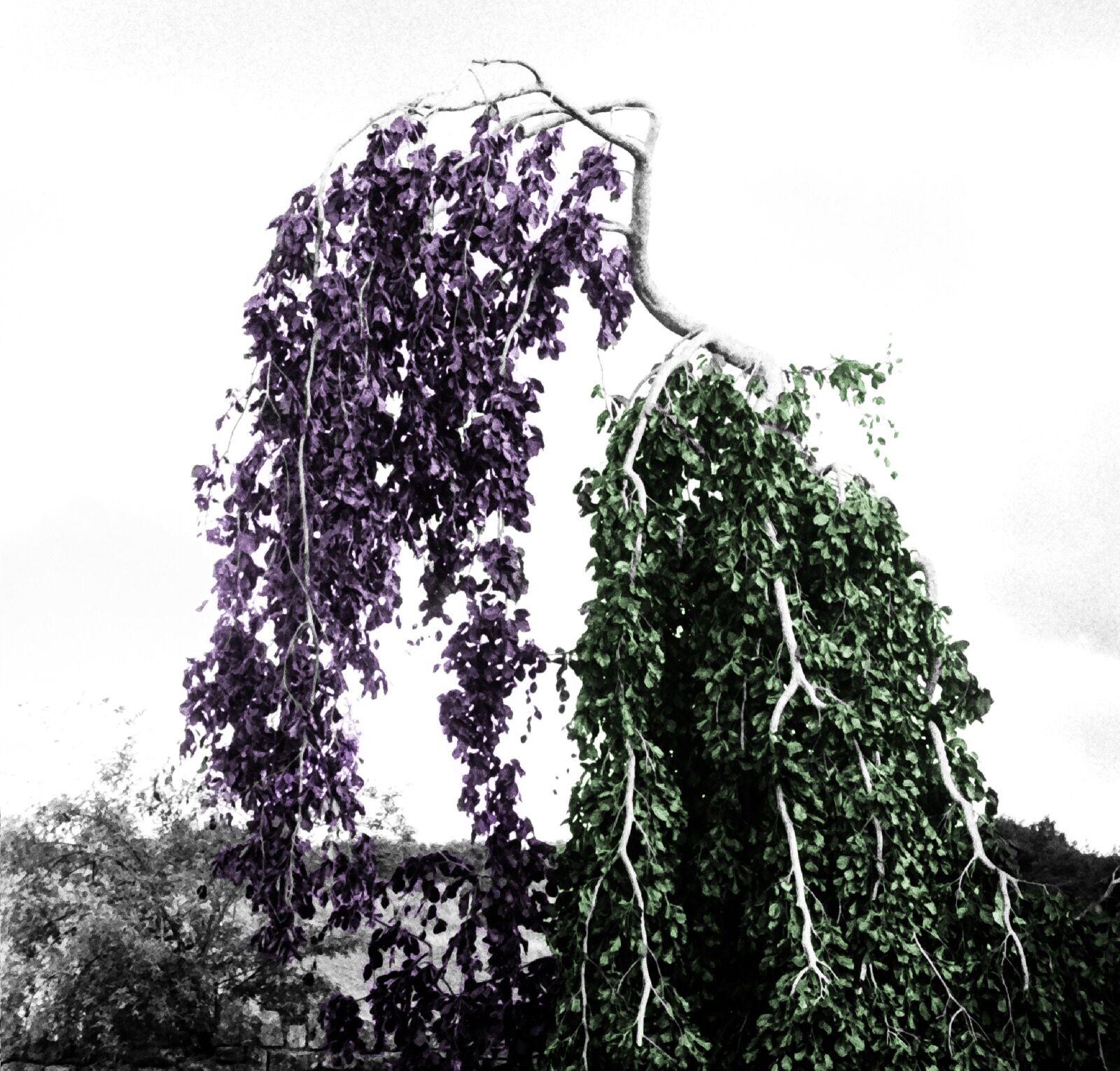 Wine Tree / 1