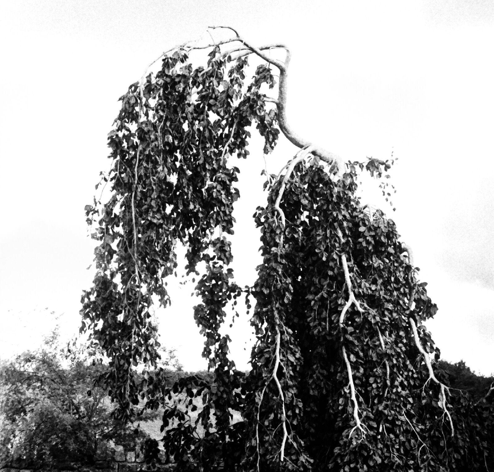 Wine Tree / 2