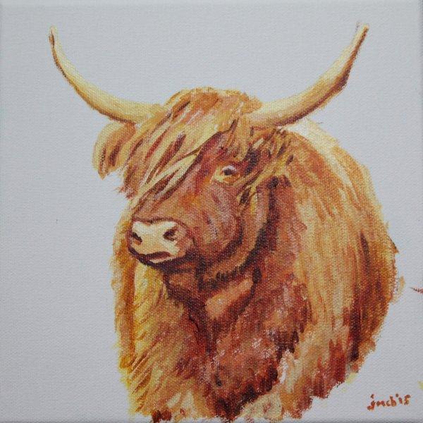 Highland cow; NFS