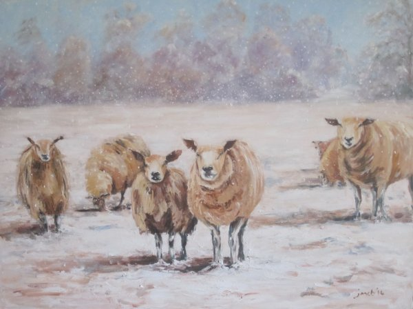 Inquisitive sheep in the wintry snow; commission