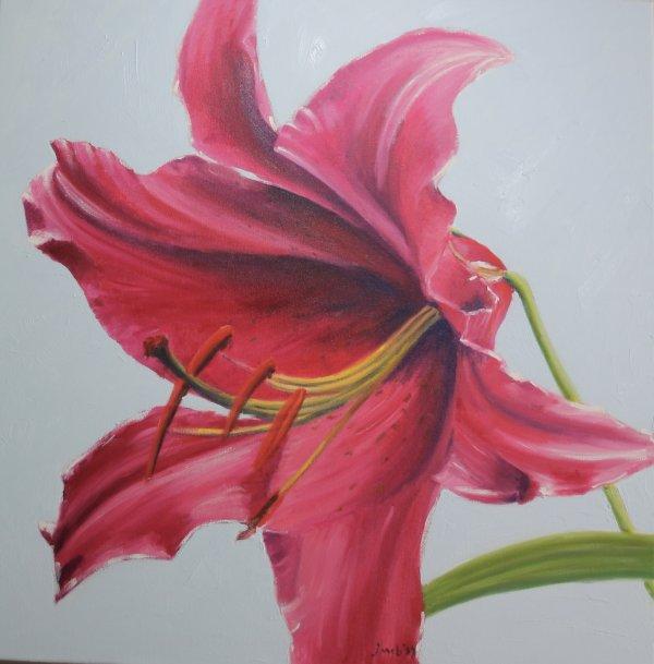 Stargazer lily; sold