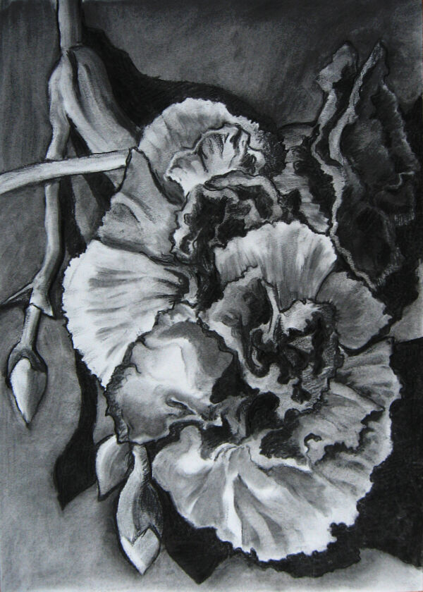 A vertical-format image of two carnations drawn in charcoal