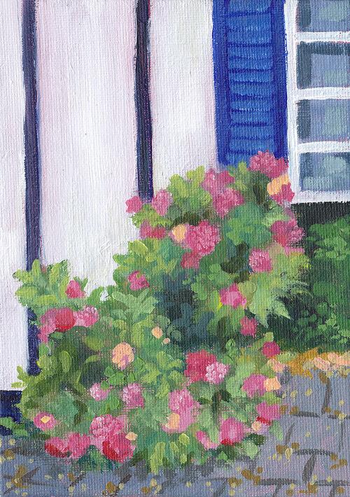 Hydrangea Outside the Kitchen Window