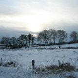 Irish Snow II