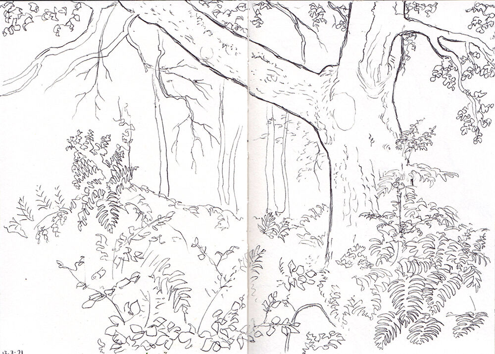 a biro line drawing of a tree surrounded by ferns
