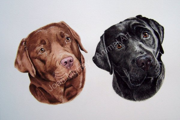 """""""...the most amazing, lifelike painting of """"Bracken & Fern"""". The true personality of the dogs jumped from the paper far and above any photo."""""""