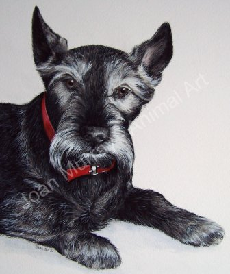"""""""Mum absolutely loved the painting of Holly. She can't decide where to show it off best. Thanks again."""""""