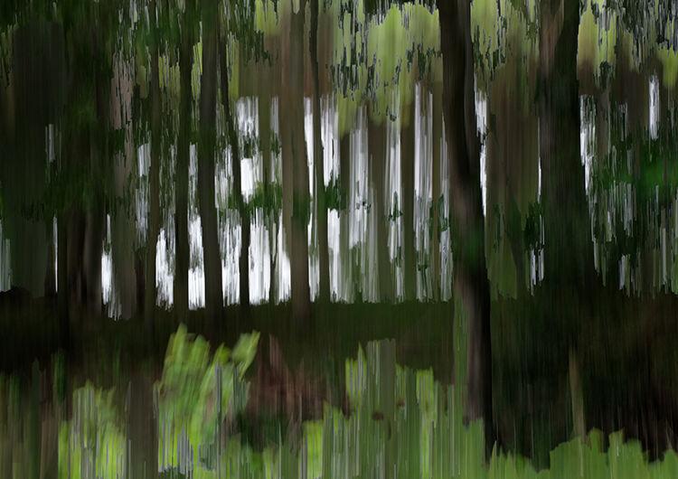 Aberlleiniog Treeline 006