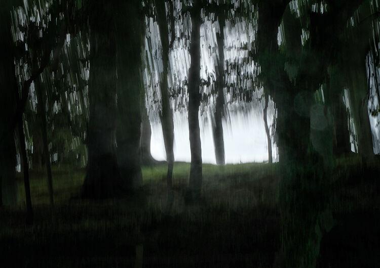Aberlleiniog Treeline 013