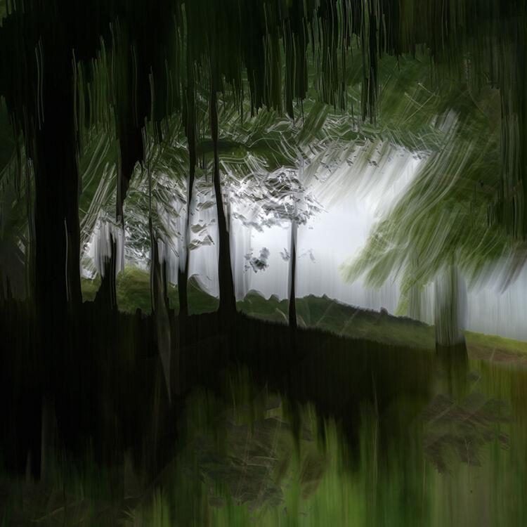 Aberlleiniog Treeline 025