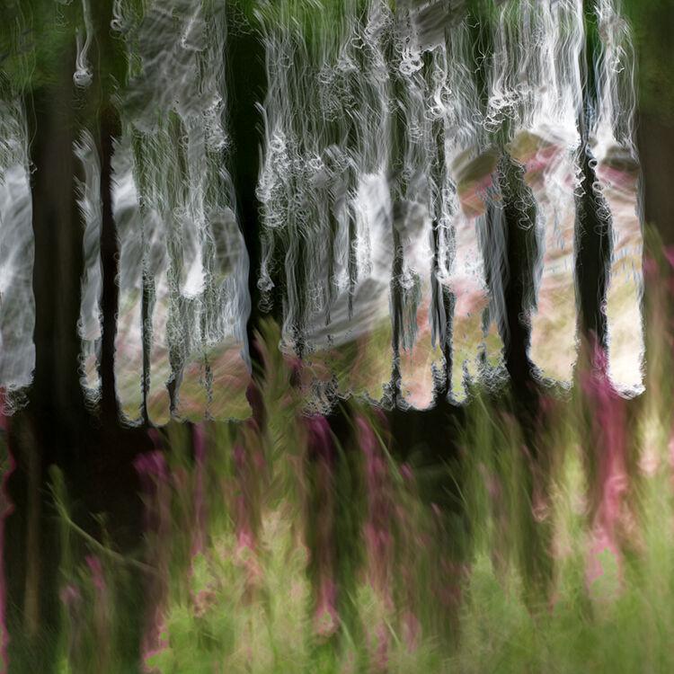 Aberlleiniog Treeline 026