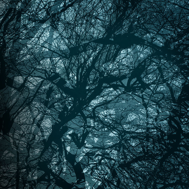 Benllech Trees