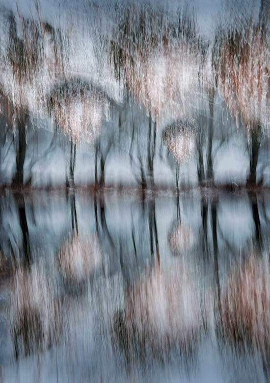 Borrowdale Tree Reflections