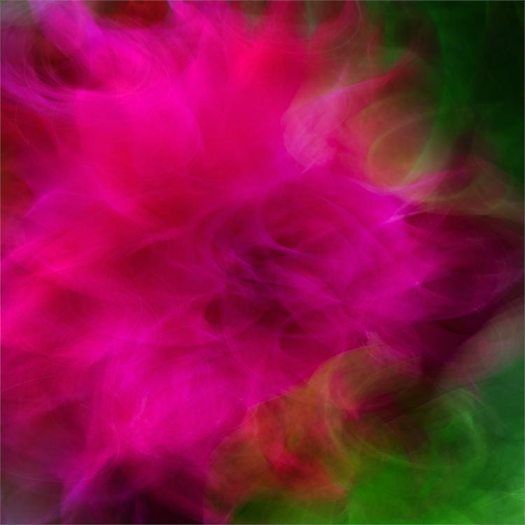 Erddig Chrysanthemum
