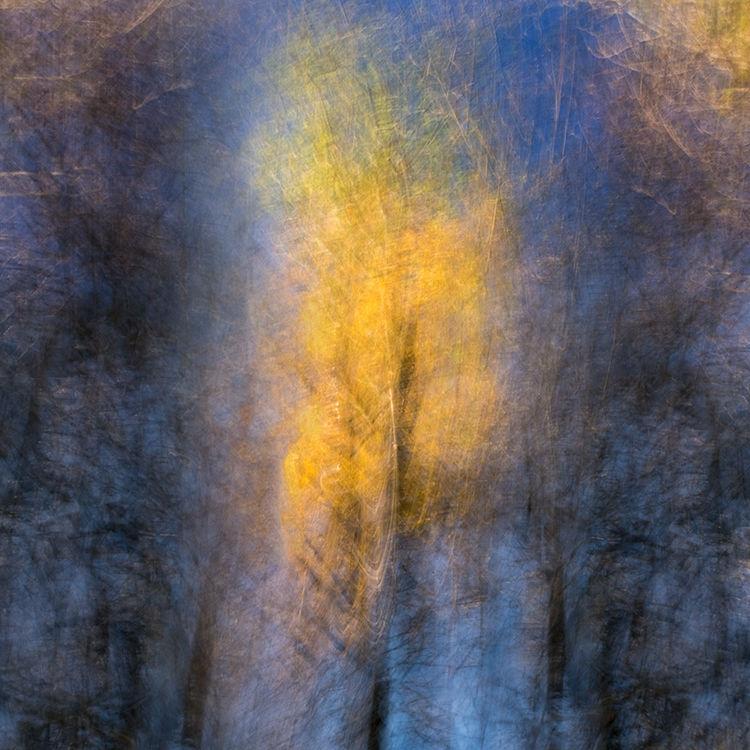 Fiery Llangoed Treee