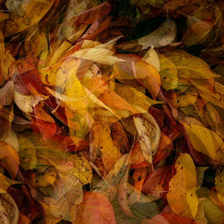 Llangoed Autumn 4