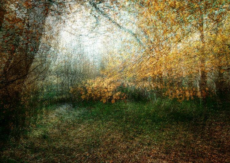 Llangoed Autumn 6