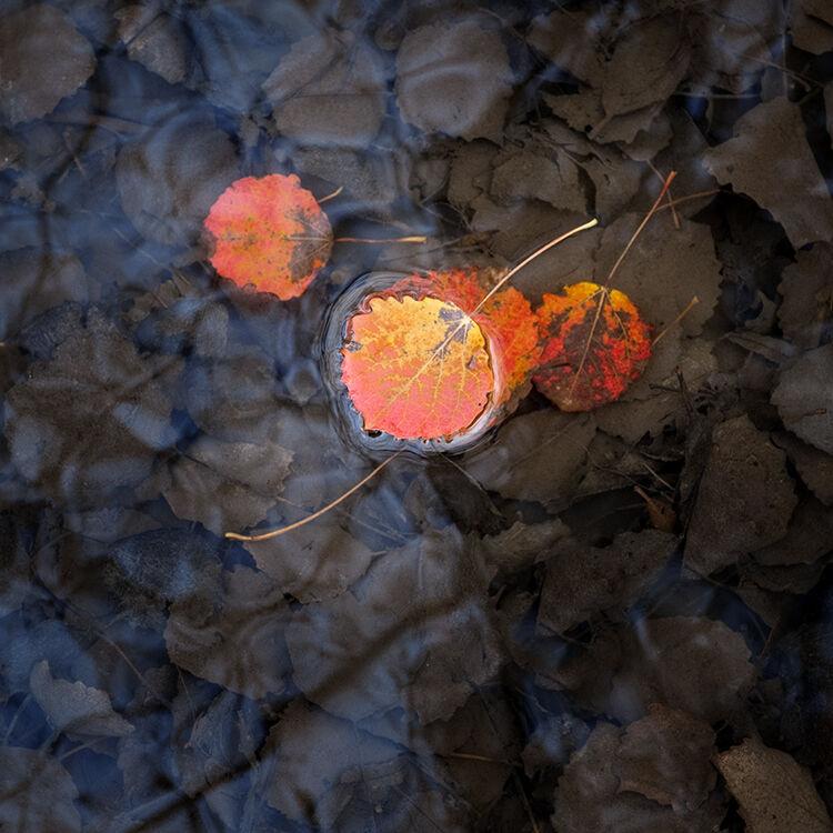 Llangoed Autumn 7