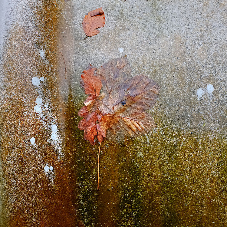 Llangoed Autumn 8