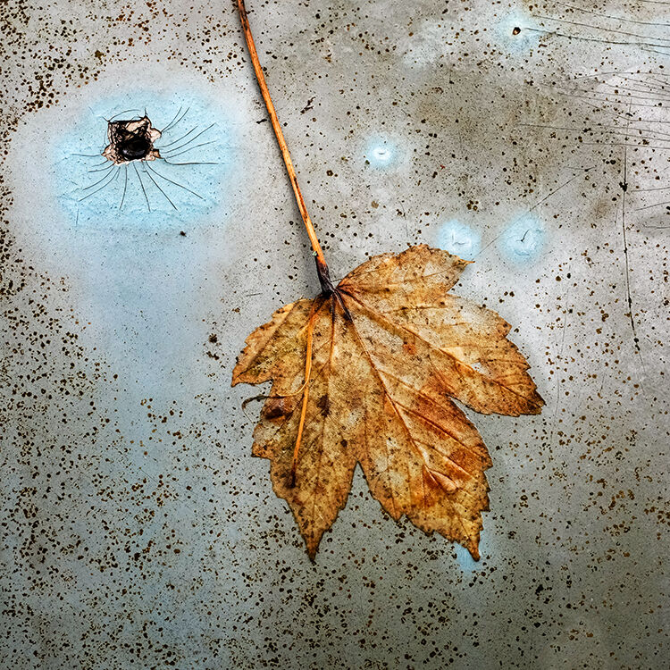 Llangoed Autumn 9