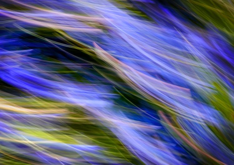 Llangoed Bluebells 2