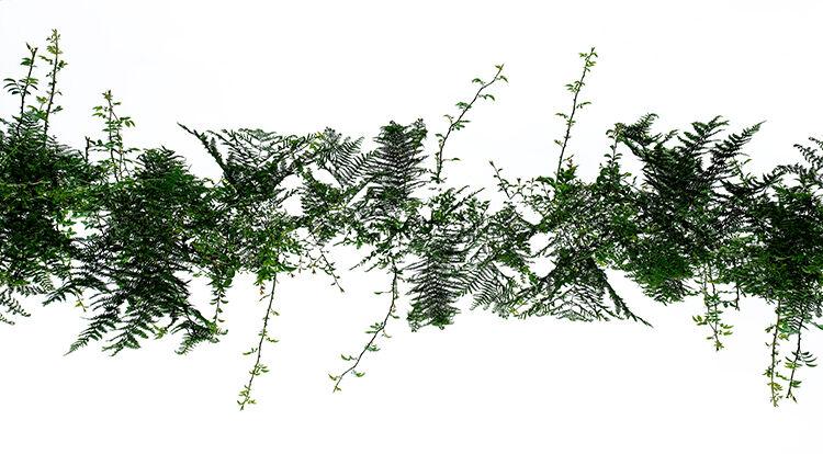 Llangoed Hedge