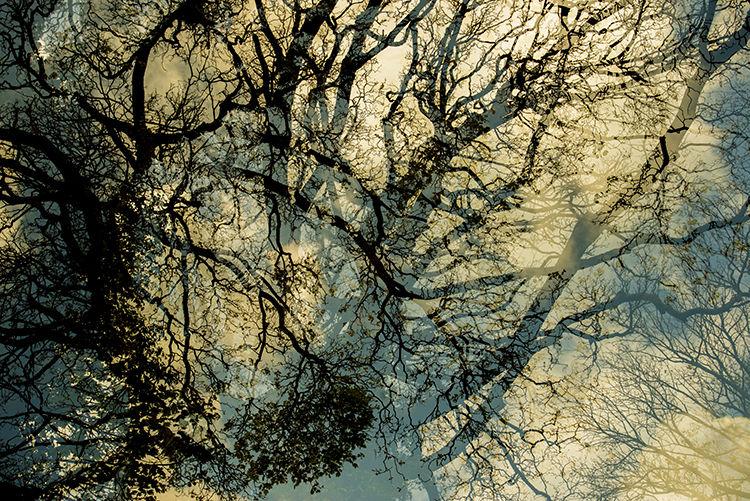 Llangoed Trees