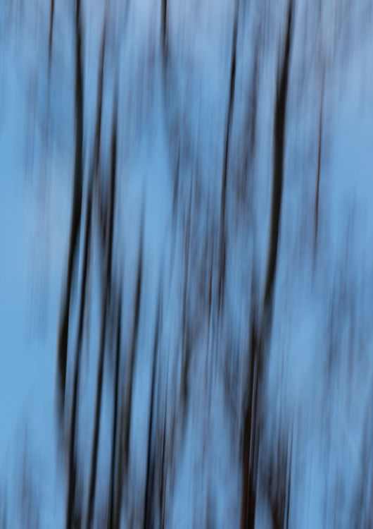 Llangoed Trees 12